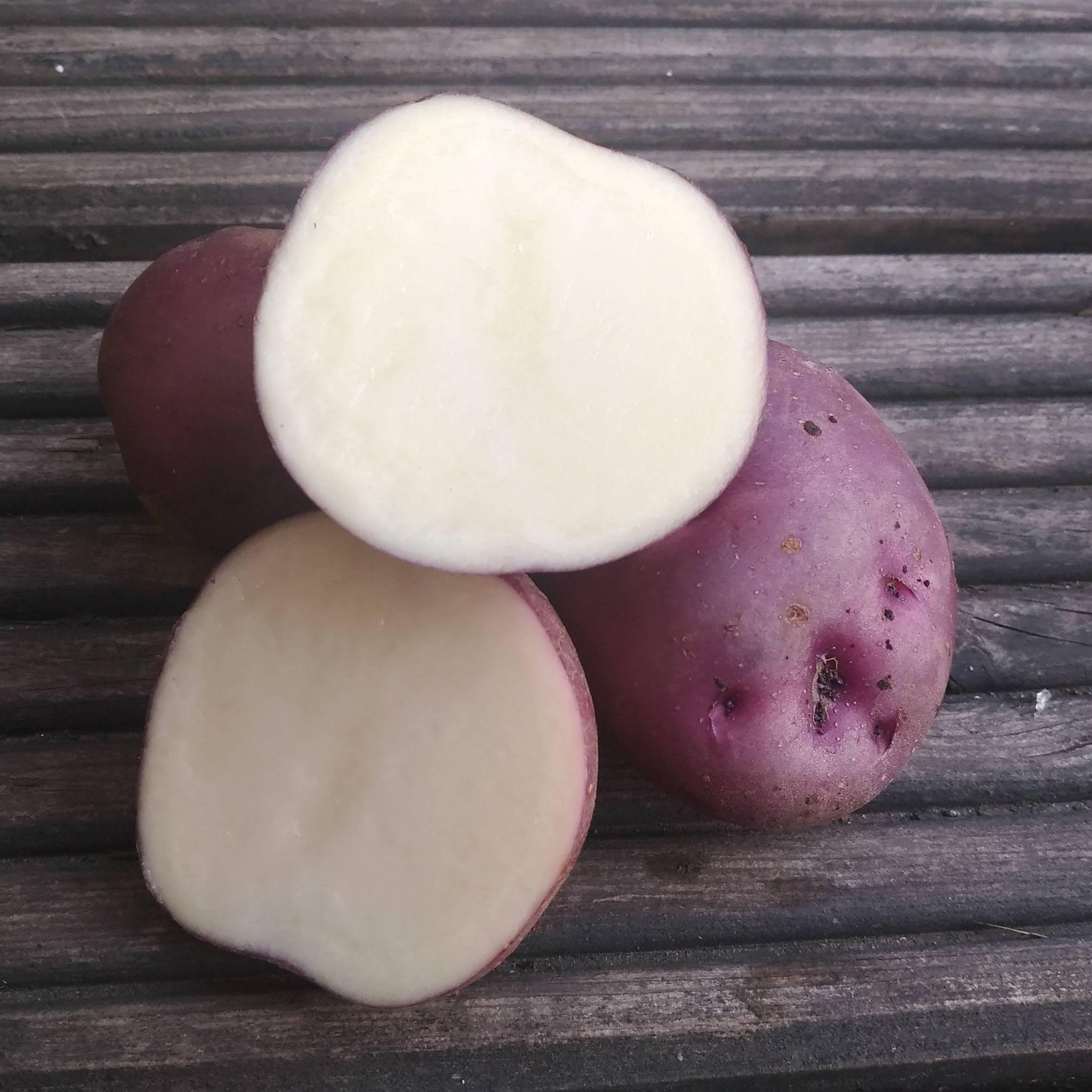 Картофель синеглазка: основные преимущества и недостатки сорта
