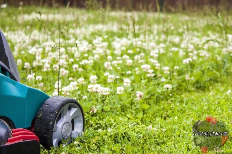 Собираем семена: какие, где, когда и как
