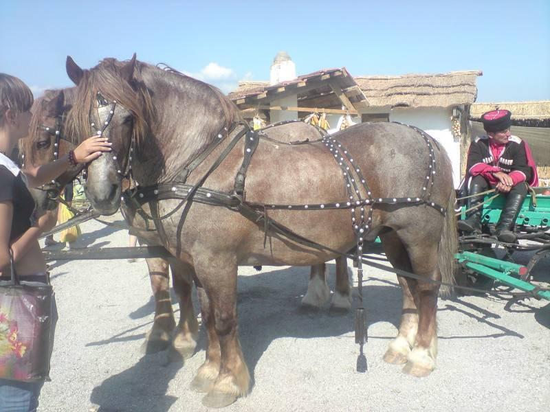 Лошади тяжеловозы — богатыри с кротким характером