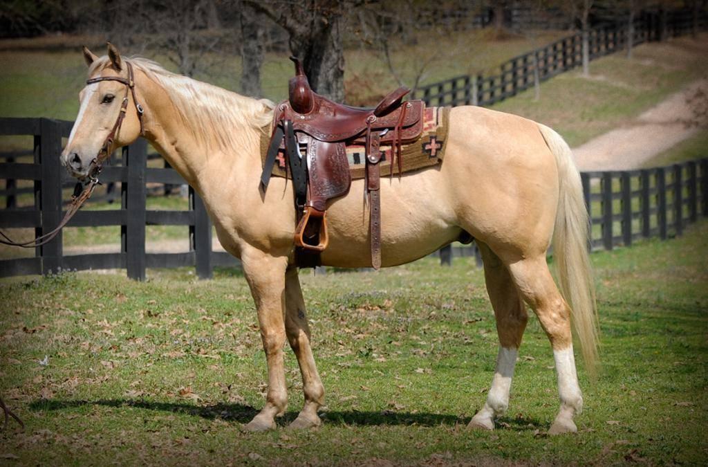 Конь-мерин: все за и против кастрации
