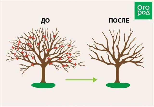 Яблочный червь. как избавиться от белых червей под корой? чем обработать яблони от червей в яблоках