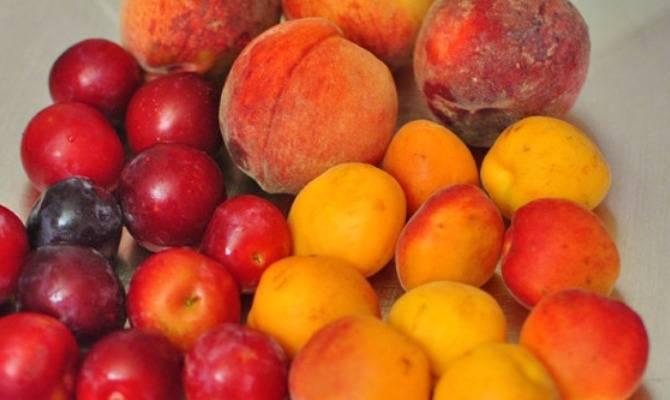 Шарафуга – гибрид абрикоса, сливы и персика