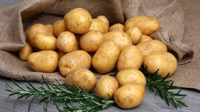 Мемфис: описание семенного сорта картофеля, характеристики, агротехника