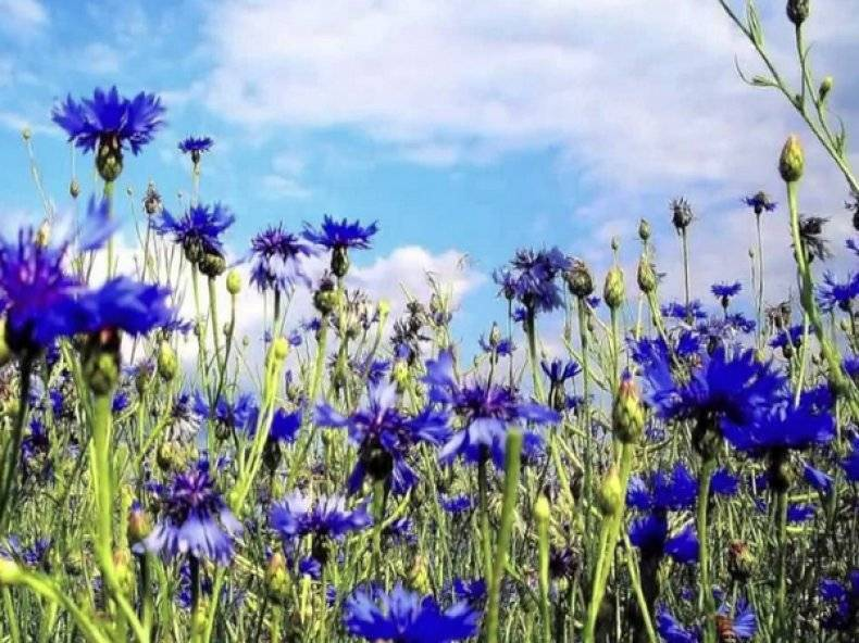 Какие цветы посадить в тени. 16 названий цветов, которые любят тень. | красивый дом и сад