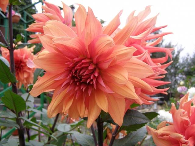 Осенние удобрения – чем подкормить сад, огород и цветник в конце сезона