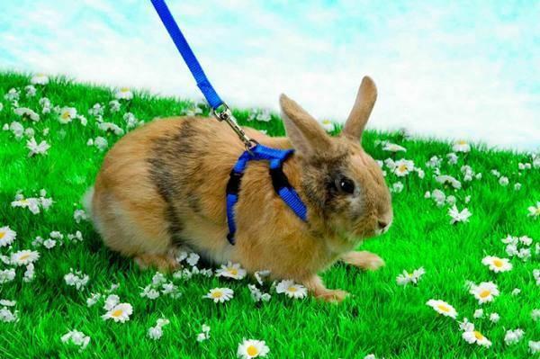 Кролики грызут клетки что делать