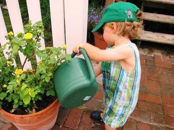 Как вырастить хороший урожай томатов в засушливое лето