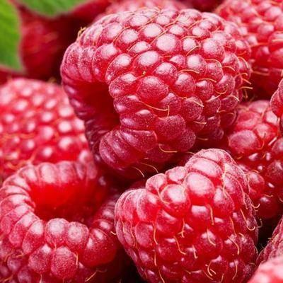 Малина рубиновый гигант — перспективный ремонтантный сорт с крупными плодами