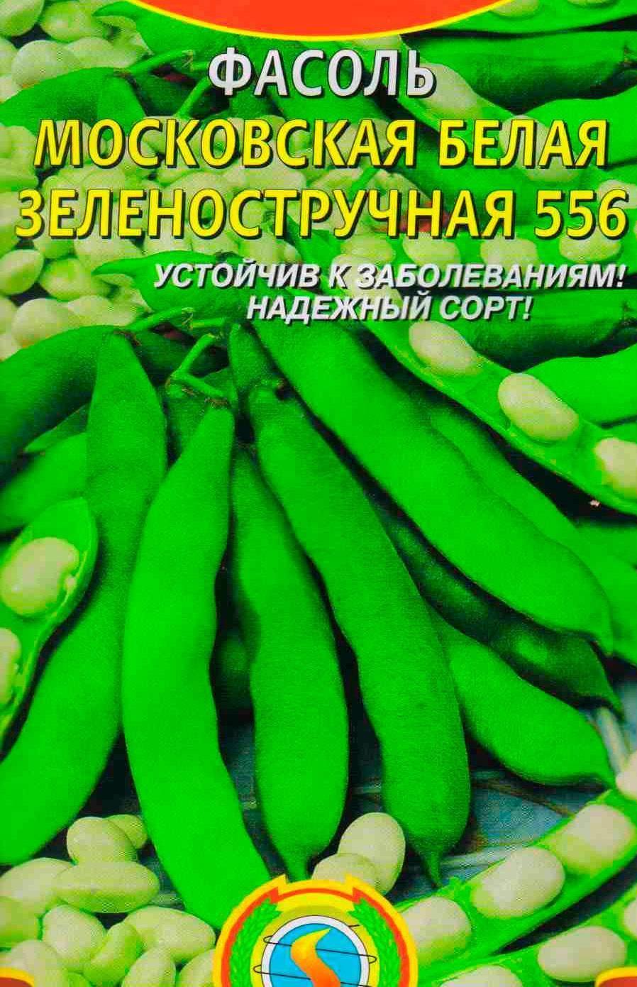 О фасоли московской белой зеленостручной 556: посадка, уход, выращивание