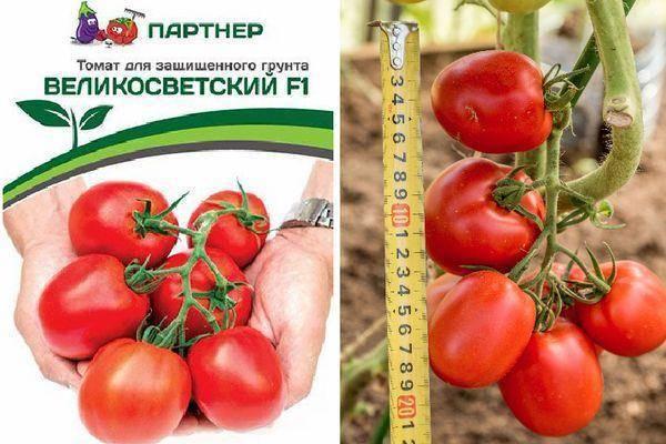 Томат великосветский: отзывы, фото, урожайность | tomatland.ru