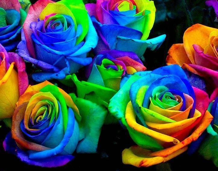 Редкие и самые красивые цветы в мире. топ-10