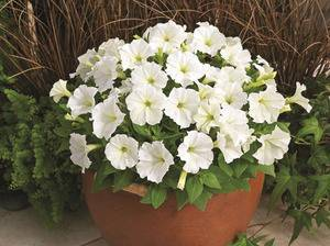 Лучшие однолетние цветы — неприхотливо односезонные цветы украшают ваш сад весь теплый сезон