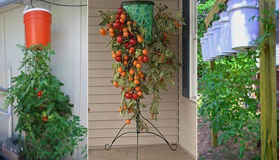 Удивительное выращивание растений в перевернутом виде. как посадить помидоры вверх ногами?