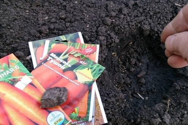 Посадка моркови на туалетную бумагу и другие варианты ленты: как наклеить и правильно проводить посев семян в открытый грунт своими руками, почему не всходят ростки?