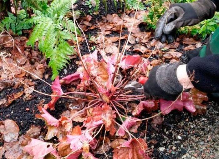 Виды и сорта колокольчиков: фото цветов, выращивание и размножение колокольчиков