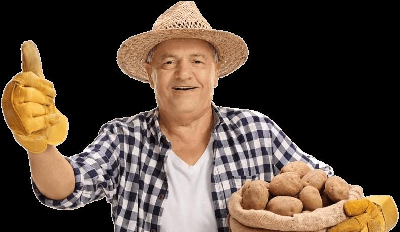 Рамона: описание семенного сорта картофеля, характеристики, агротехника