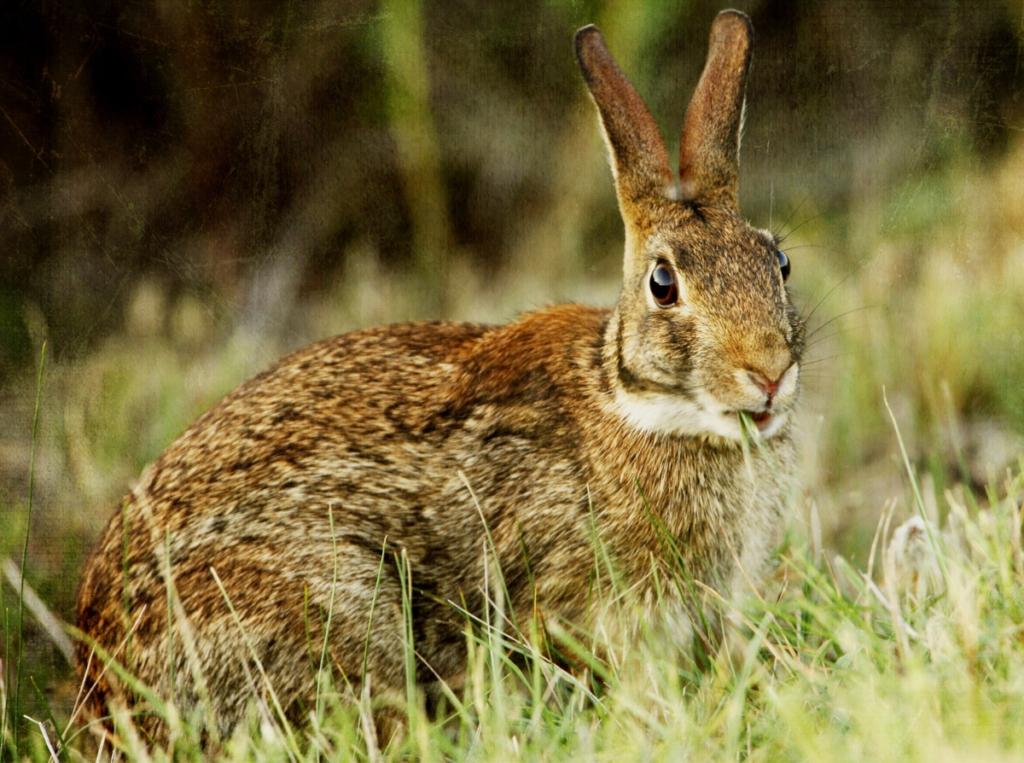 Кролики стучат лапами: причины, особенности поведения, что делать