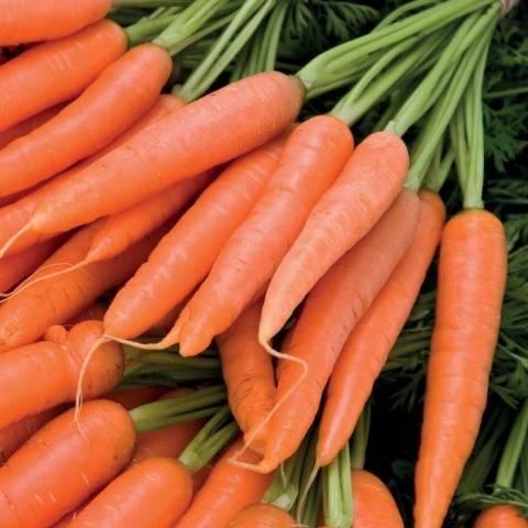 Посадка моркови семенами: при какой температуре, правильный, быстрый посев в открытый грунт, чтобы получить хороший урожай на грядке, удачные советы, лучшие хитрости