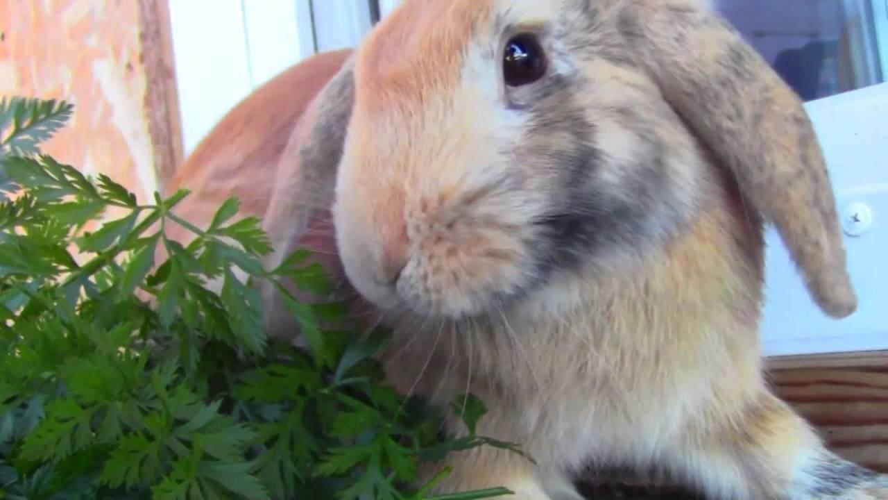 Правильное питание декоративных кроликов. как не навредить своему любимцу