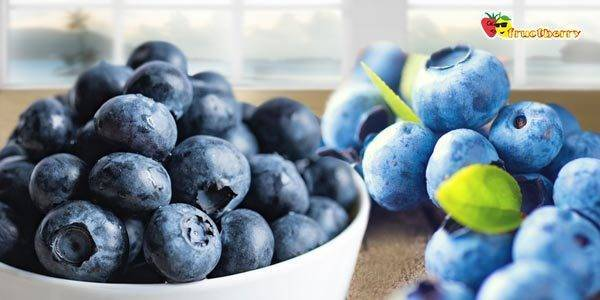 Отличия черники от голубики — свойства ягод и их особенности