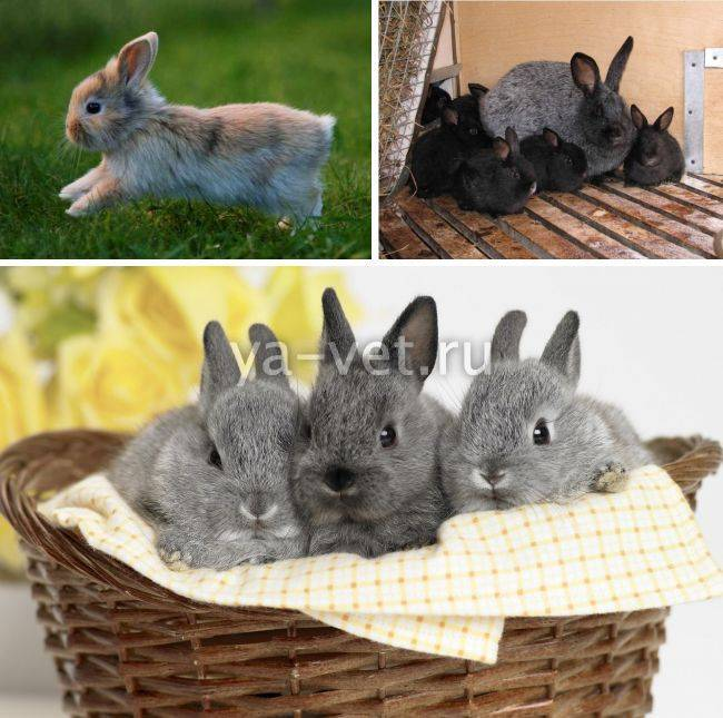 Проблемы с поносом у кроликов: причины, лечение и профилактика