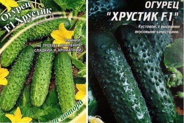 Лучшие сорта огурцов: описание и фото