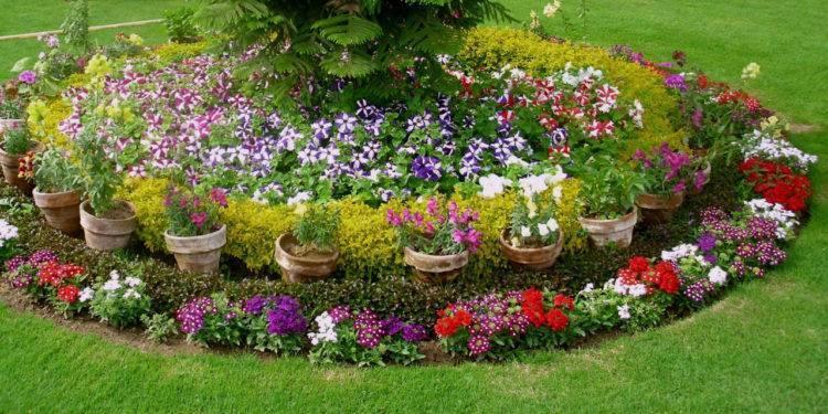 Таблица совместимости растений в саду и огороде