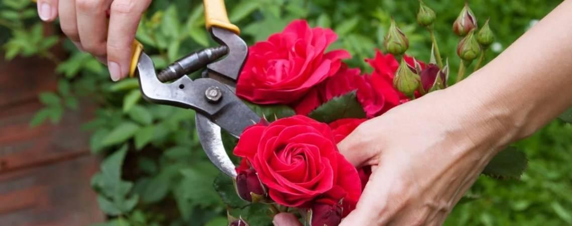 Что делать в июне – 30 самых важных дел в саду, огороде и цветнике