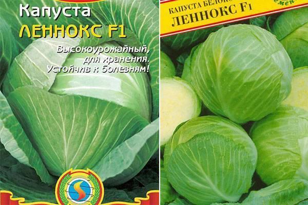 Капуста анкома: особенности и характеристика сорта, выращивание и уход
