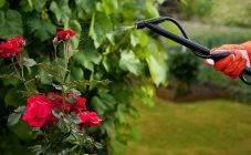 Дрожжи для растений как удобрение. 3 простых рецепта приготовления удобрений из дрожжей.