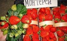 Сохнет клубника: причины, меры борьбы уход за ягодами