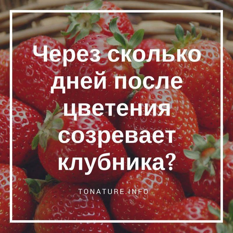 Когда поспевает клубника в лесу. когда созревают лесные ягоды