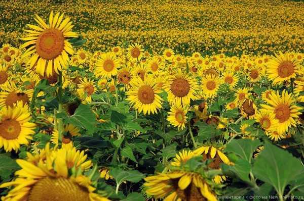 Сезонная аллергия на цветение, когда начнется?