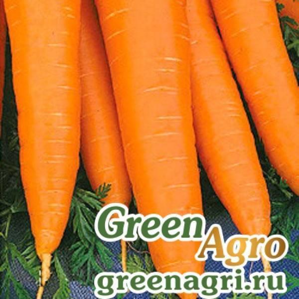 Сорта моркови с фото и описанием