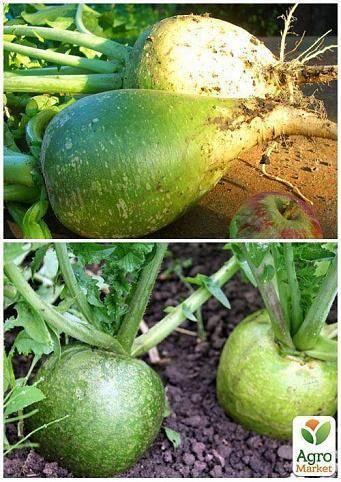 Салат из маргелланской редьки