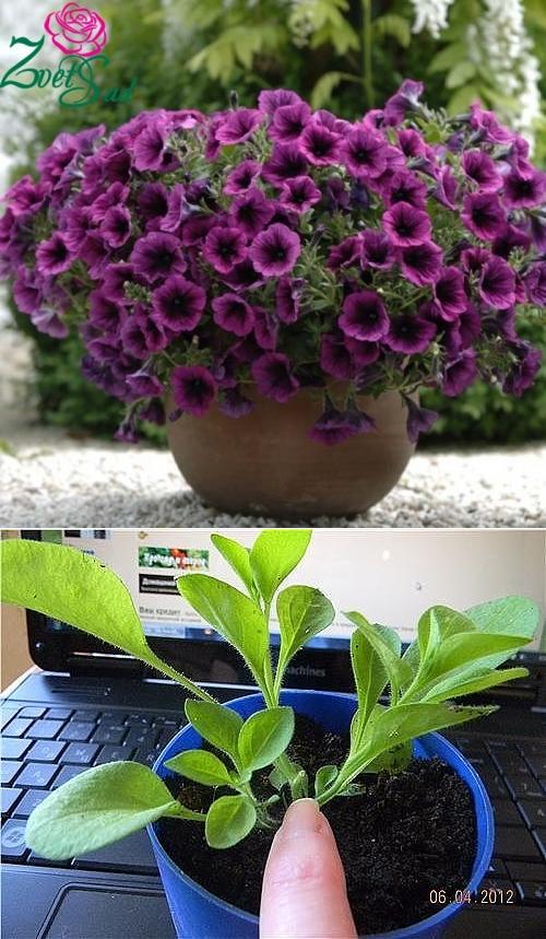 Летники в саду - как добиться пышного и долгого цветения? | сажаем сад