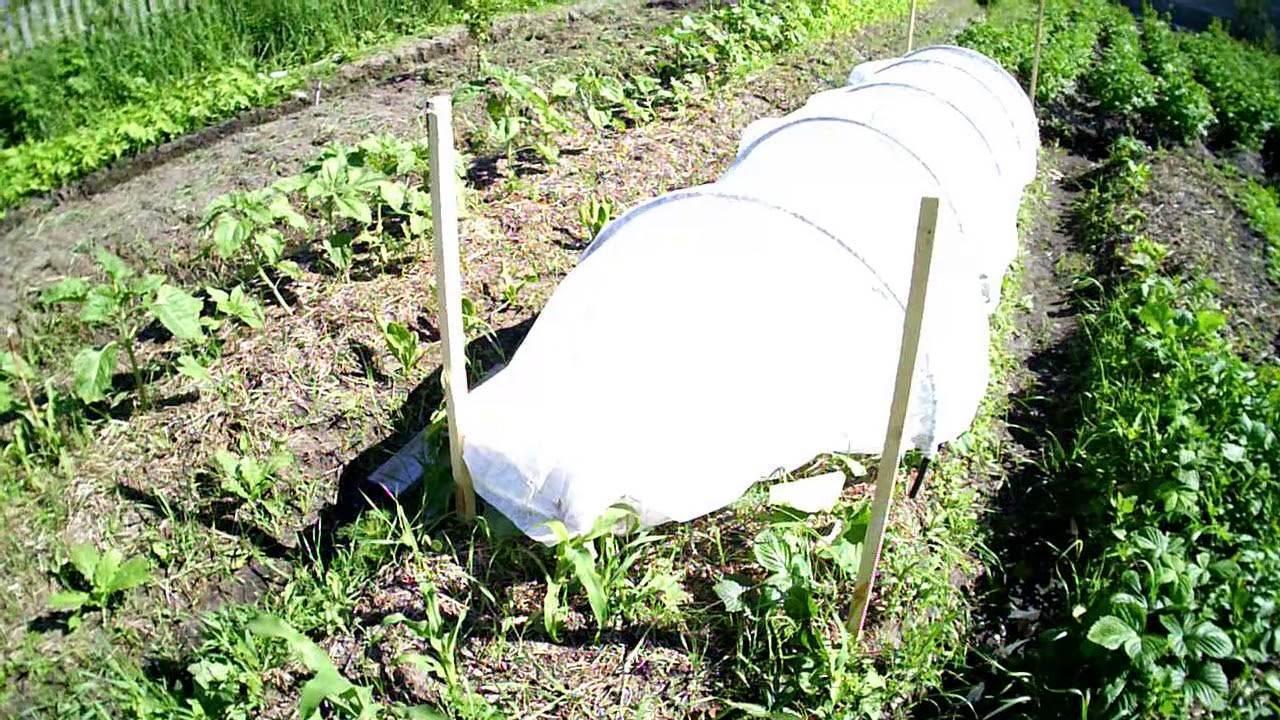 Формирование огурцов в открытом грунте без подвязки, кустовых и пучковых
