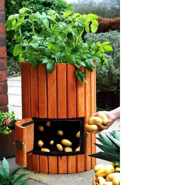 Выращивание картофеля в ящиках и коробах без дна: описание принципа, плюсы и минусы, необходимые условия, пошаговая инструкция и требуемый уход