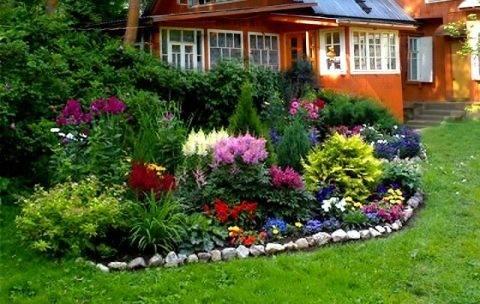 Цветок гейхера - особенности выращивания и ухода