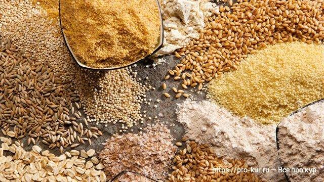 Правила кормления кур пророщенной пшеницей и как ее вырастить самостоятельно
