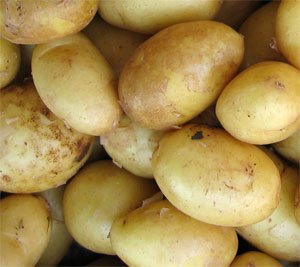 О картофеле Гала: описание семенного сорта картофеля, характеристики, агротехника,
