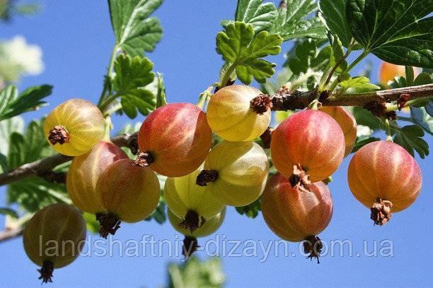 Как выполнить посадку плодовых деревьев и кустарников в домашних условиях?