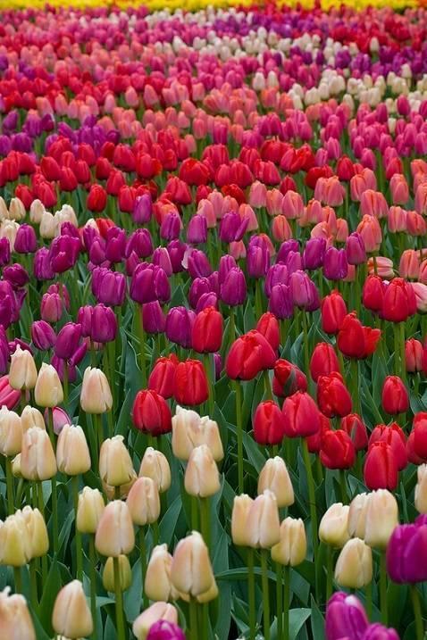 Многолетние, двухлетние и однолетние цветы для сада: фото, названия, описание лучших цветущих растений