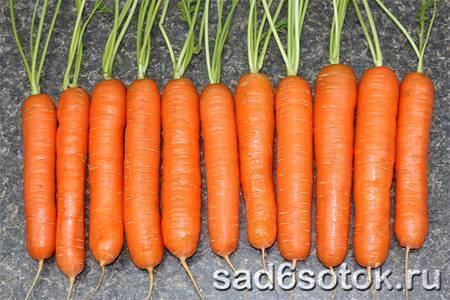 Сорта моркови для хранения на зиму: какой вид лучше выбрать для длительного нахождения в погребе, поздний, ранний либо сладкий