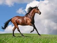 Сколько весит лошадь? средний вес взрослого коня, масса жеребенка при рождении, способы расчета