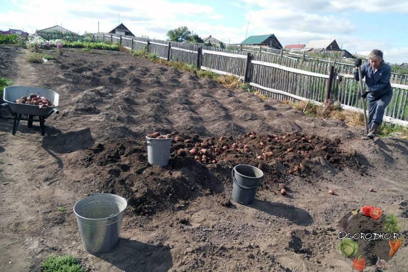 Сон копать картошку