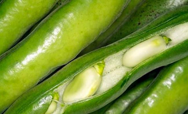Овощные бобы: выращивание и уход в открытом грунте