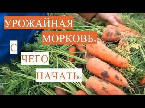 Как замочить семена моркови перед посадкой: в чем правильно держать, чтобы ускорить быструю всхожесть и за сколько времени до посева, можно ли в кипятке, перекиси?