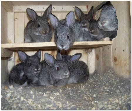 Почему домашние кролики грызут клетку и что с этим делать
