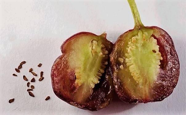 Фуксия: выращивание и уход, пересадка и размножение